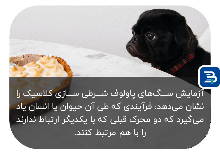 نظریه سگ های پاولف در شرطی سازی کلاسیک